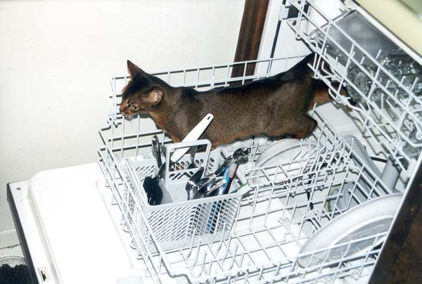 Dishwasher Mango 2